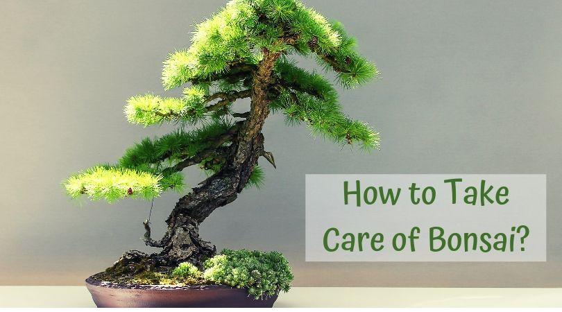 How to Take Care of Bonsais